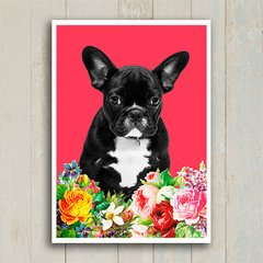 Poster French bulldog - Encadreé Posters