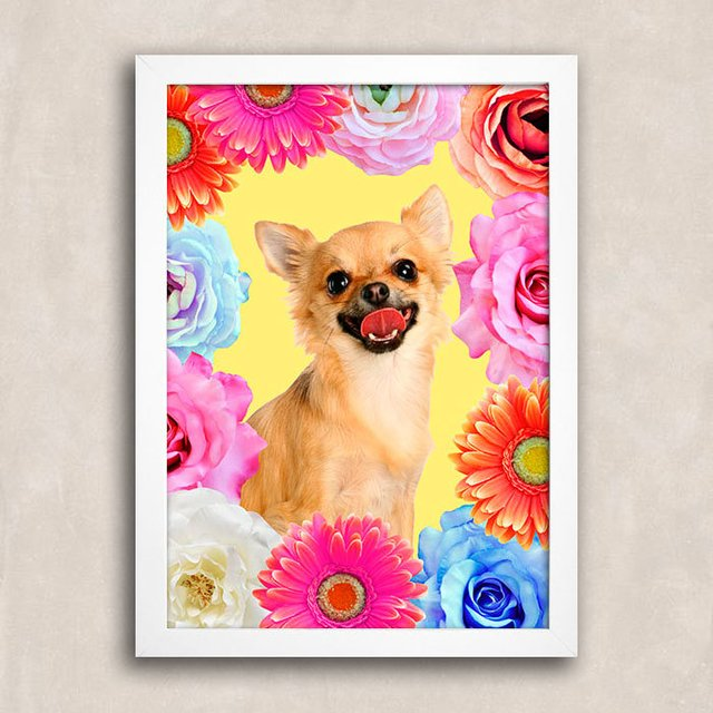 Poster Chihuahua Smile na internet