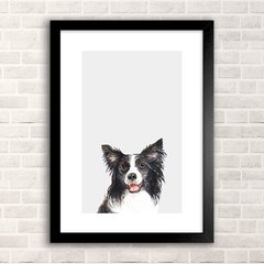 Poster Collie