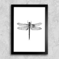 Poster Dragonfly