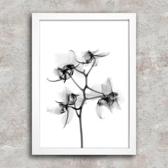 Poster Flower X-Ray - comprar online