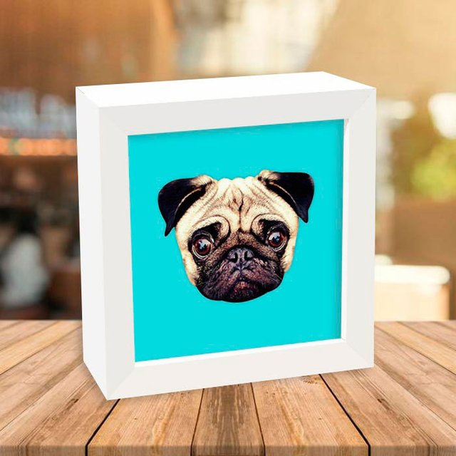 Quadro Box Pug Blue na internet
