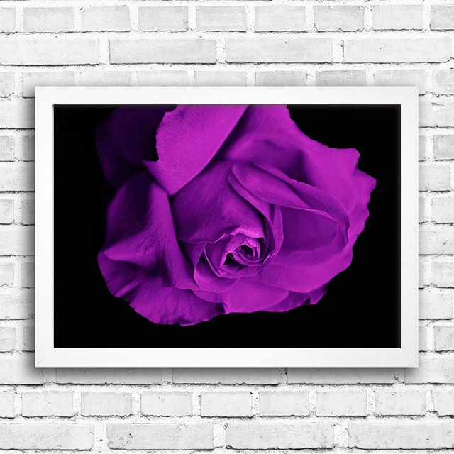 Poster Purple Rose - comprar online