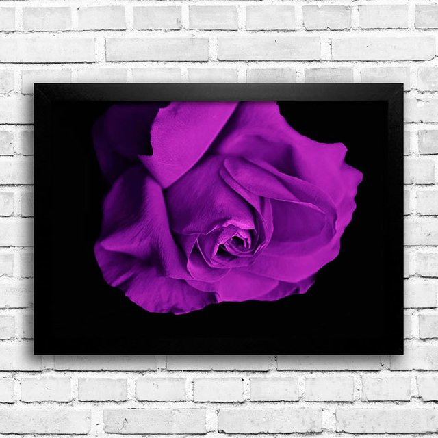 Poster Purple Rose na internet