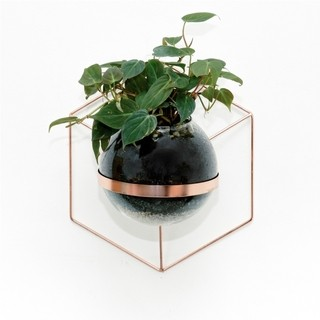 Pared Angular Bomba vidrio - cobre - escoge la planta - Sativa - buy online