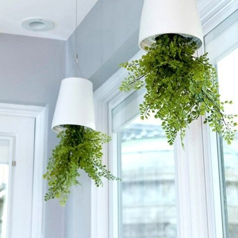 Maceta Invertida, Sky Planter
