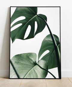 Cuadro Monstera Leaf 35x50 Marco Chato Natural