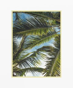 Cuadro Palm Leaves