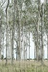 bosque panorama color 1