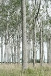 bosque panorama color 2
