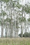 bosque panorama color 3