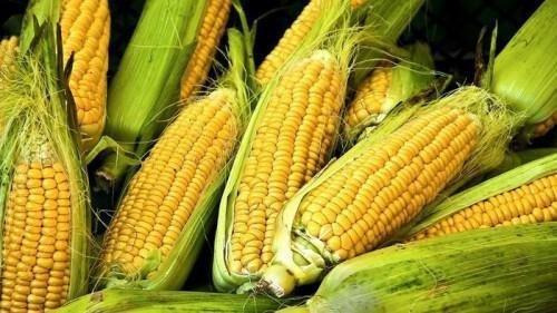 Choclos Agroecológicos