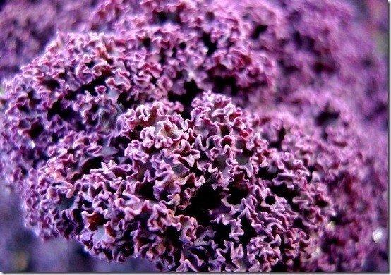 Kale Orgánico