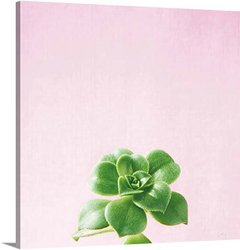 Succulent Simplicity on Pink VII