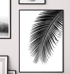 Tropical Leaf in Black and White