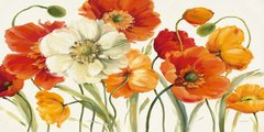 Poppies Melody I en internet