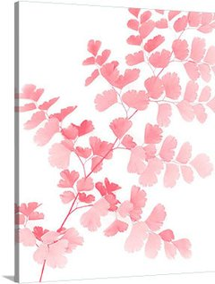 Pink Maidenhair