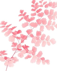 Pink Maidenhair en internet