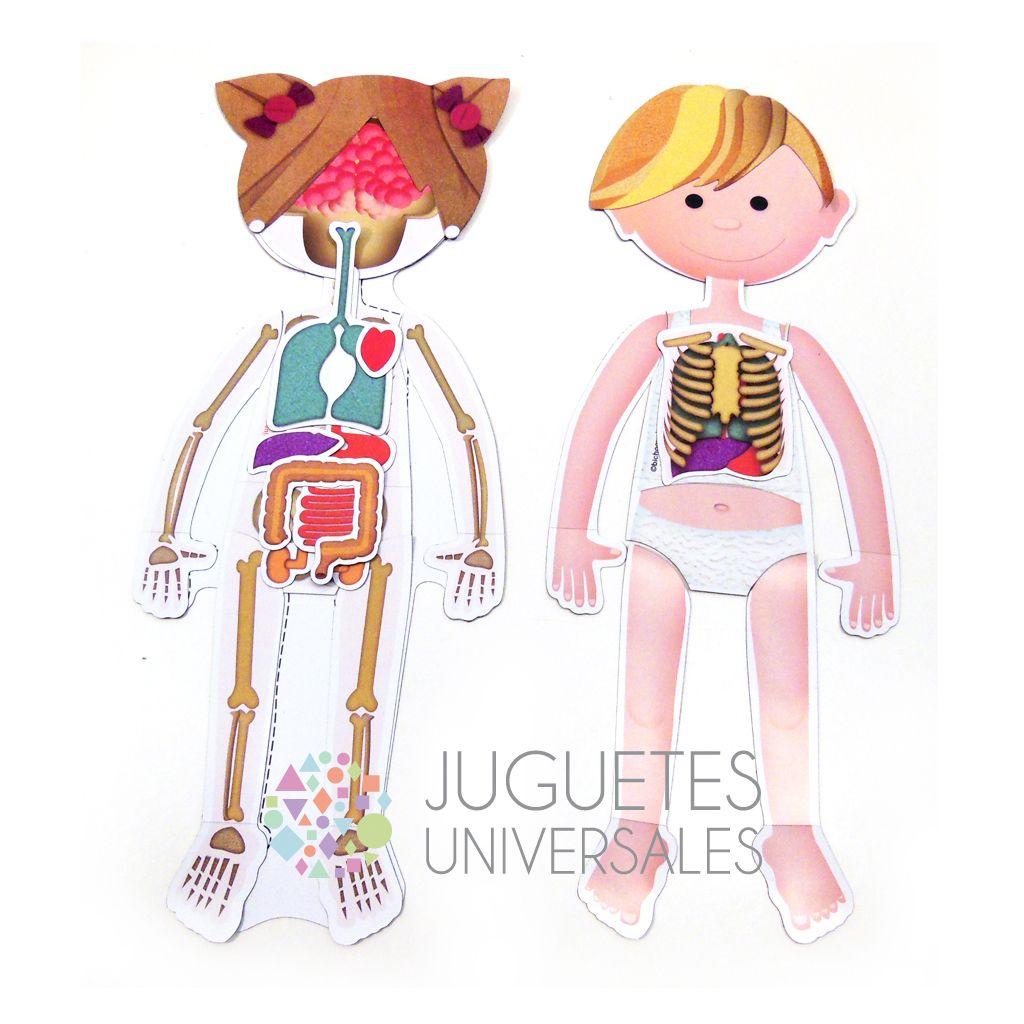 Cuerpo humano imantado - Juguetes Universales — Juguetes Universales