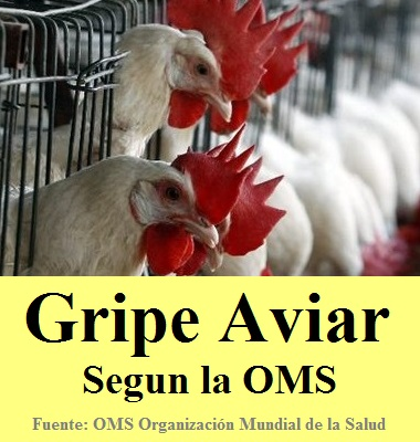 Gripe aviar segun la OMS - Infectologia