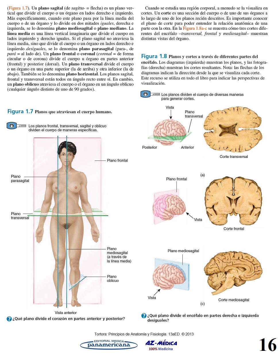 Encantador Anatomía Y Fisiología Colorante Figura Libro De Trabajo ...