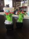 Mini plantitas Decorativas #AR202