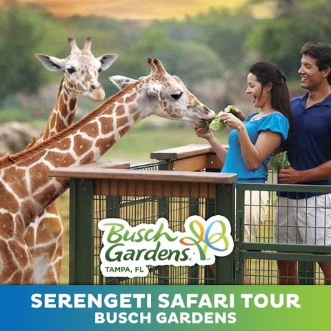 Ingresso Serengeti Safari Tour - Bush Gardens (2020)