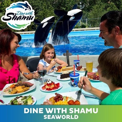 Dine With  Killer Whales - Sea World Orlando (2020)