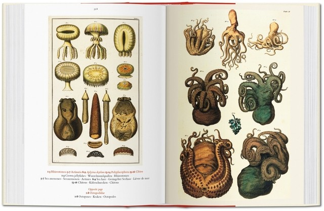 Imagen de CABINET OF NATURAL CURIOSITIES
