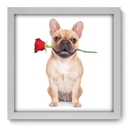 Quadro Decorativo - Dog - 030qdob