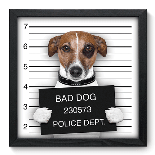 Quadro Decorativo - Bad Dog - 048qdsp