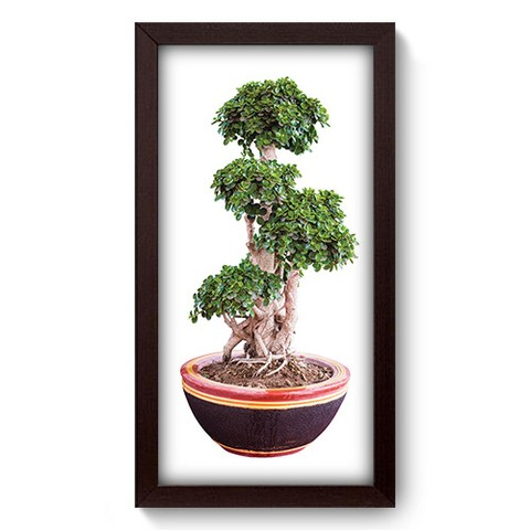 Quadro Decorativo - Bonsai - 281qddp
