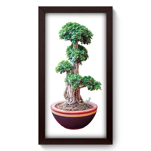 Quadro Decorativo - Bonsai - 282qddp