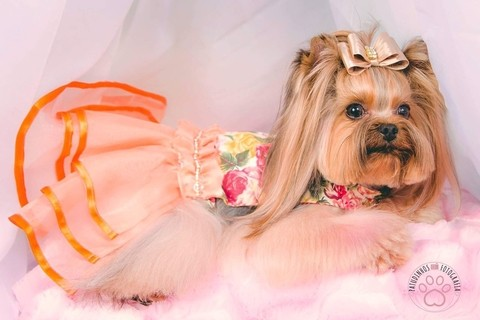 VESTIDO JOY PET DESIGN - FLORAL COM CINTO STRASS