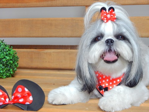 BANDANA DE TECIDO JOY - KIT MINNIE