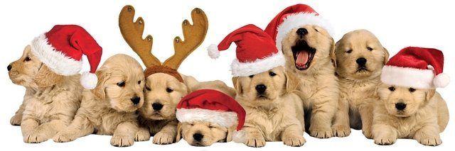 Adesivo 3D Christmas Puppies - Cod.STTL-0025