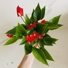 Anthurium Million Flowers - anette