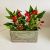 Anthurium Million Flowers en porta maceta Belfast jardinera
