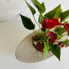 Anthurium Million Flowers Rodas