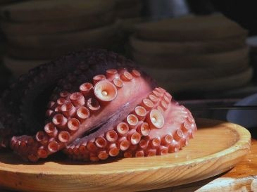 PULPO CHILENO