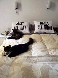 "Set x 2 Almohadones ""SLEEP ALL DAY/DANCE ALL NIGHT"" - comprar online"