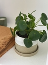 Dúo Cilindro Arena + Pilea Peperomioides