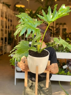 Dúo Stand G + Philodendron