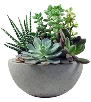 Home Concrete Bowl