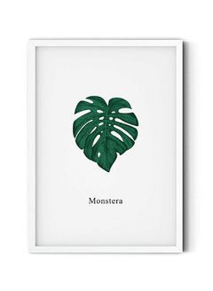 Monstera en internet