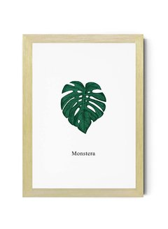 Monstera - comprar online