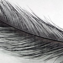 Spey  Feather