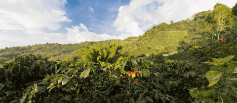 Premium Coffee Tour With Cupping And Brewing Methods
