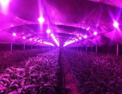 Combo X 10 Led 50w  220v Grow Indoor Cultivo Full Spectrum con bornera - tienda online