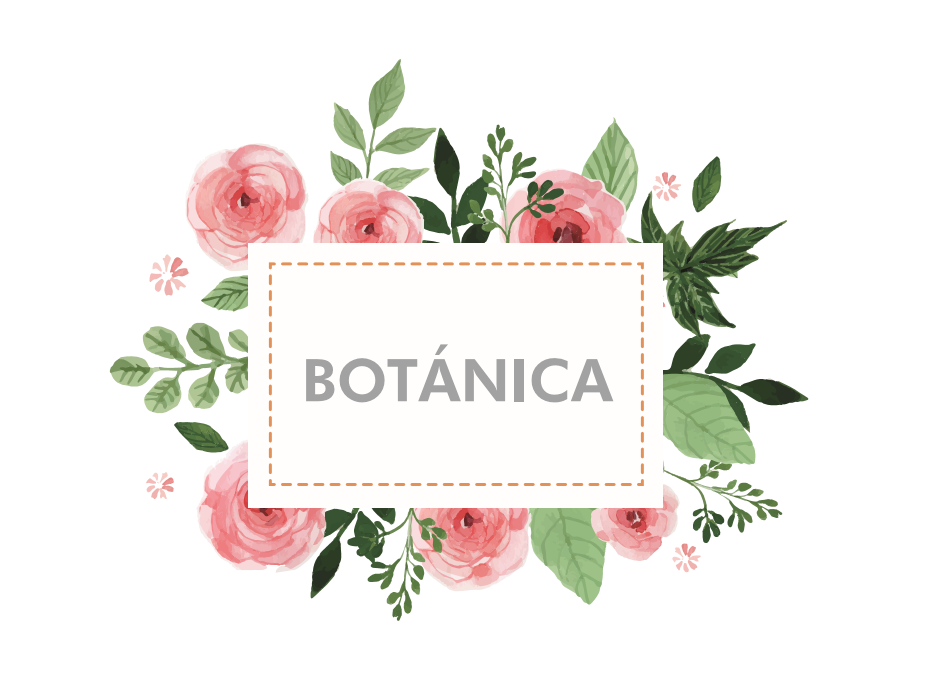 Online botanica